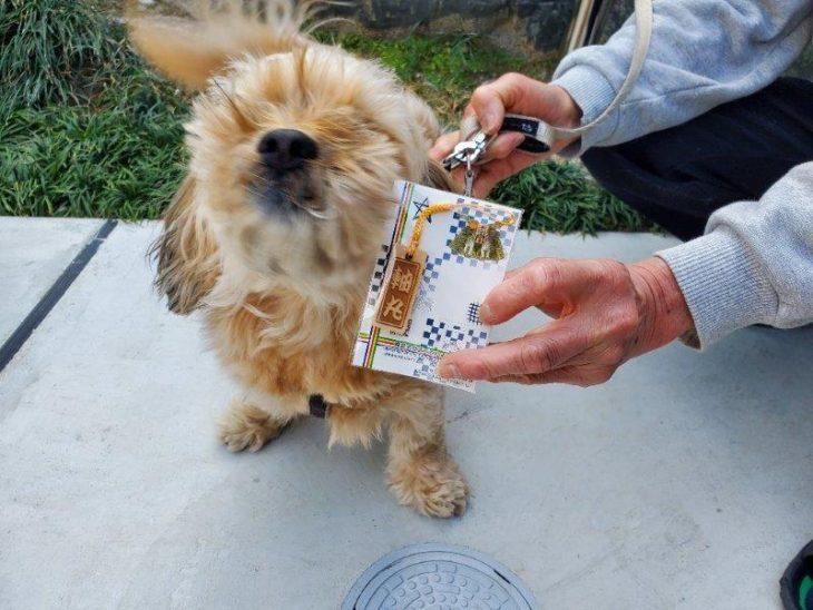 一人息子と保護犬「軸丸」君の未来につながるリノベーション